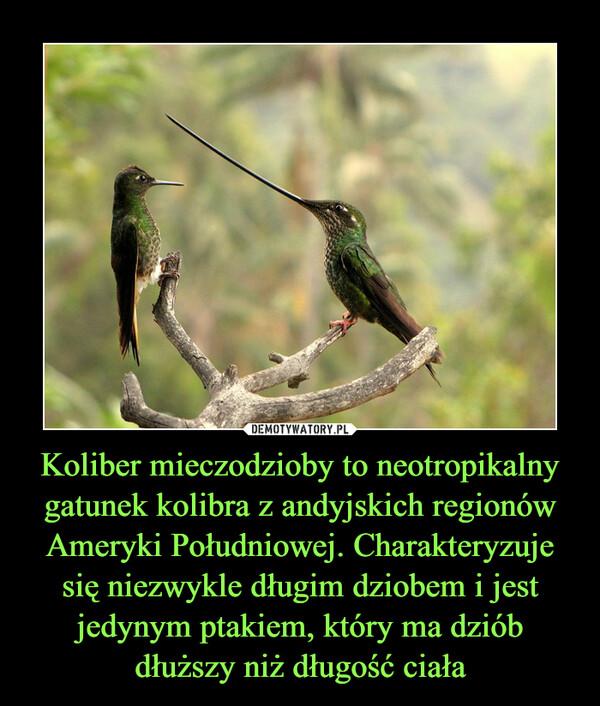 Koliber mieczodzioby to neotropikalny gatunek kolibra z andyjskich regionów Ameryki Południowej. Charakteryzuje się niezwykle długim dziobem i jest jedynym ptakiem, który ma dziób dłuższy niż długość ciała –
