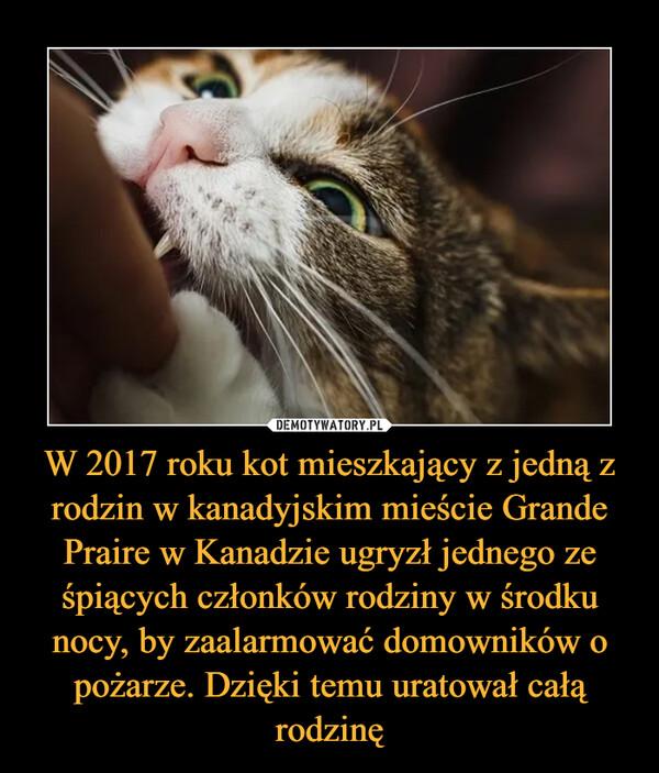 W 2017 roku kot mieszkający z jedną z rodzin w kanadyjskim mieście Grande Praire w Kanadzie ugryzł jednego ze śpiących członków rodziny w środku nocy, by zaalarmować domowników o pożarze. Dzięki temu uratował całą rodzinę –